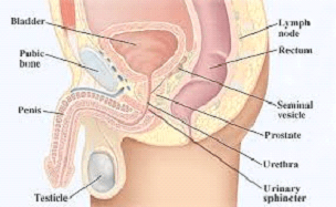 Ultimate Guide To Urethral Sounding 4